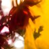 """""""Plant Dreaming Deep 01,"""" Gayle Saunders"""